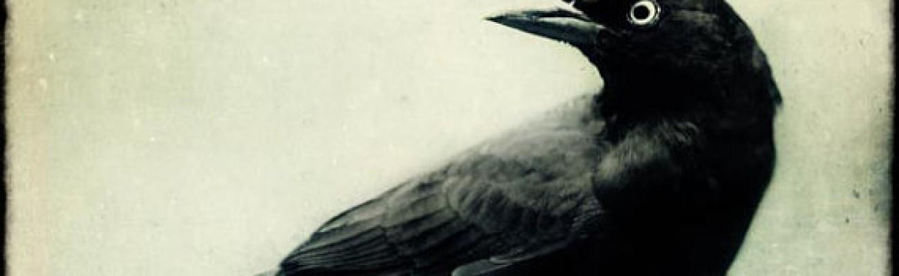 Original story: Blackbird
