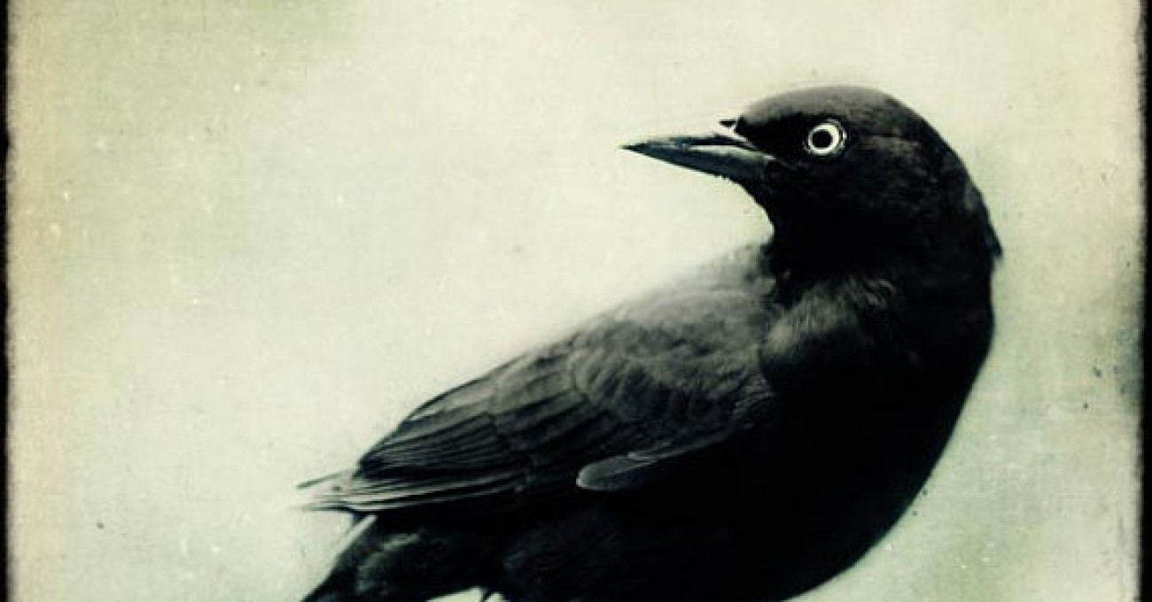 Original story: Blackbird